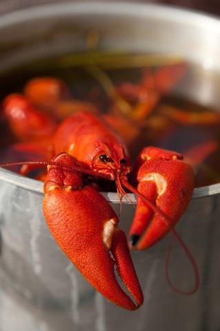 crayfishdreamstime_10687064