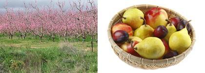 langkloof fruit
