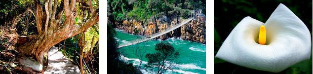 Plettenberg Bay Attractions - Tsitsikamma National Park