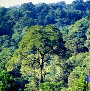 Yellowwood_forest