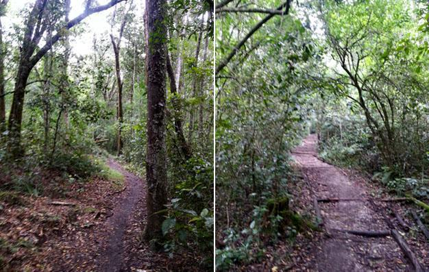 Harkerville Red Route cycle trail forest scenes 1