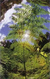 Beautiful ferns