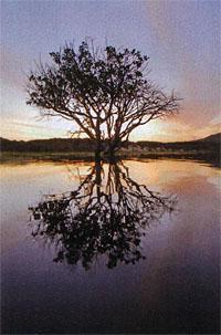 Flooded tree