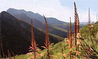 Mountainsides coverd in colourful fynbos