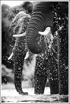 Elephants at the water by Heinrich van den Berg