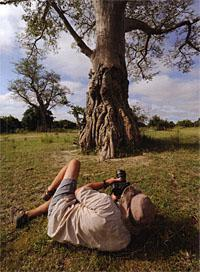 Rogers photographing a baobab