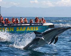 Ocean Safaris Boat Tours