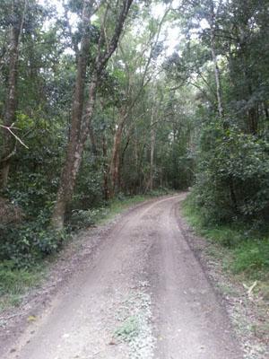 Homtini Cycle Trail Rheendal