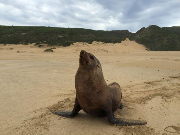Robberg Nature Reserve reopens 12 June 2020