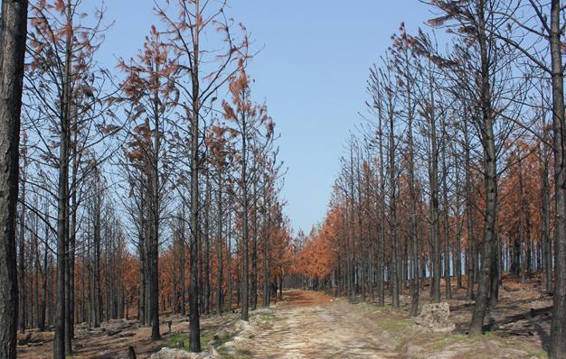 2017 Knysna wildfire disaster