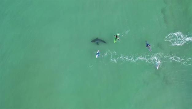urgent safety shark warning 23 July 2020