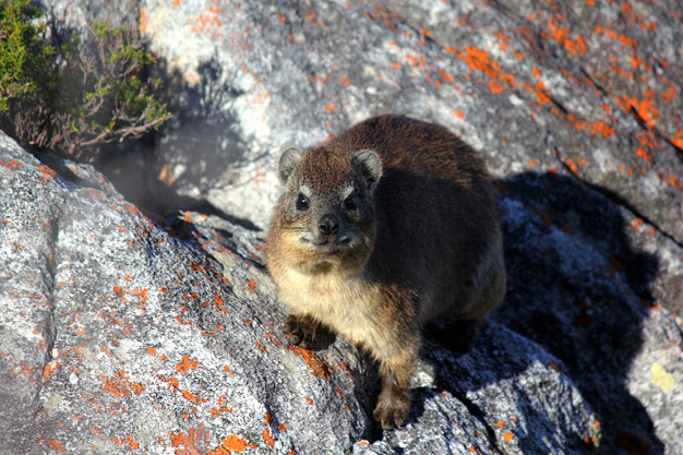 Over-population and development posing biggest threat to biodiversity in the Southern Cape