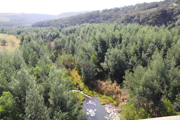 View of the Krom river and invasive alien plants