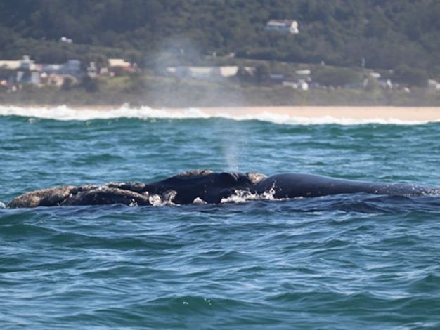 Get to know your whales & dolphins in Plettenberg Bay