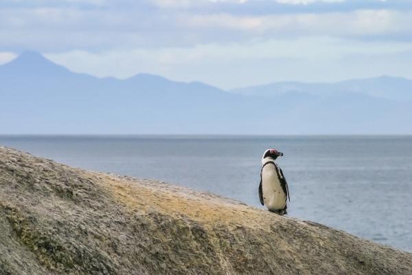 African Penguin Day NVT