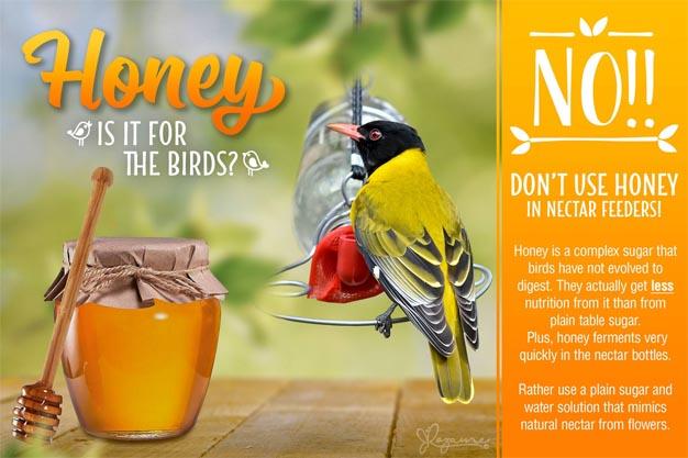 Plett Local birds