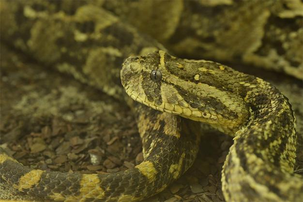 Snake Season on the Garden Route