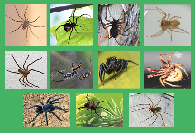 Spiders on the Garden Route