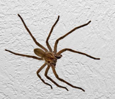 Garden Route Spiders