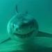 sharks-7