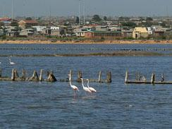 Flamingoes Port Elizabeth
