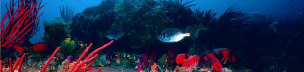 Scuba Diving Port Elizabeth3