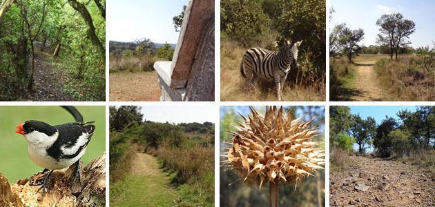 The Moreleta Kloof Nature Reserve, Pretoria