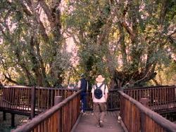 Wonderboom Trail