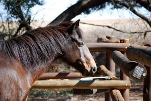 Horses at Rietlvei Nature Reserve