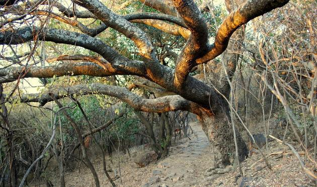 Hiking Trail at Wonderboom