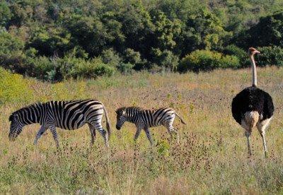Moreletakloof Nature Reserve