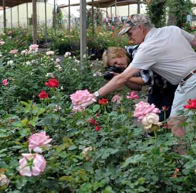 Ludwigs Rose Farm