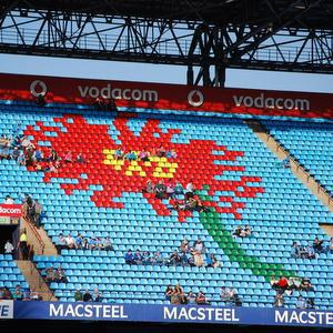 Barberton Daisy at Loftus Stadium