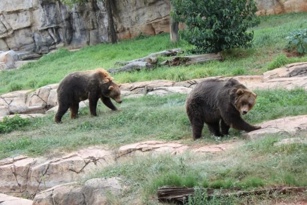 Bears Pretoria Zoo