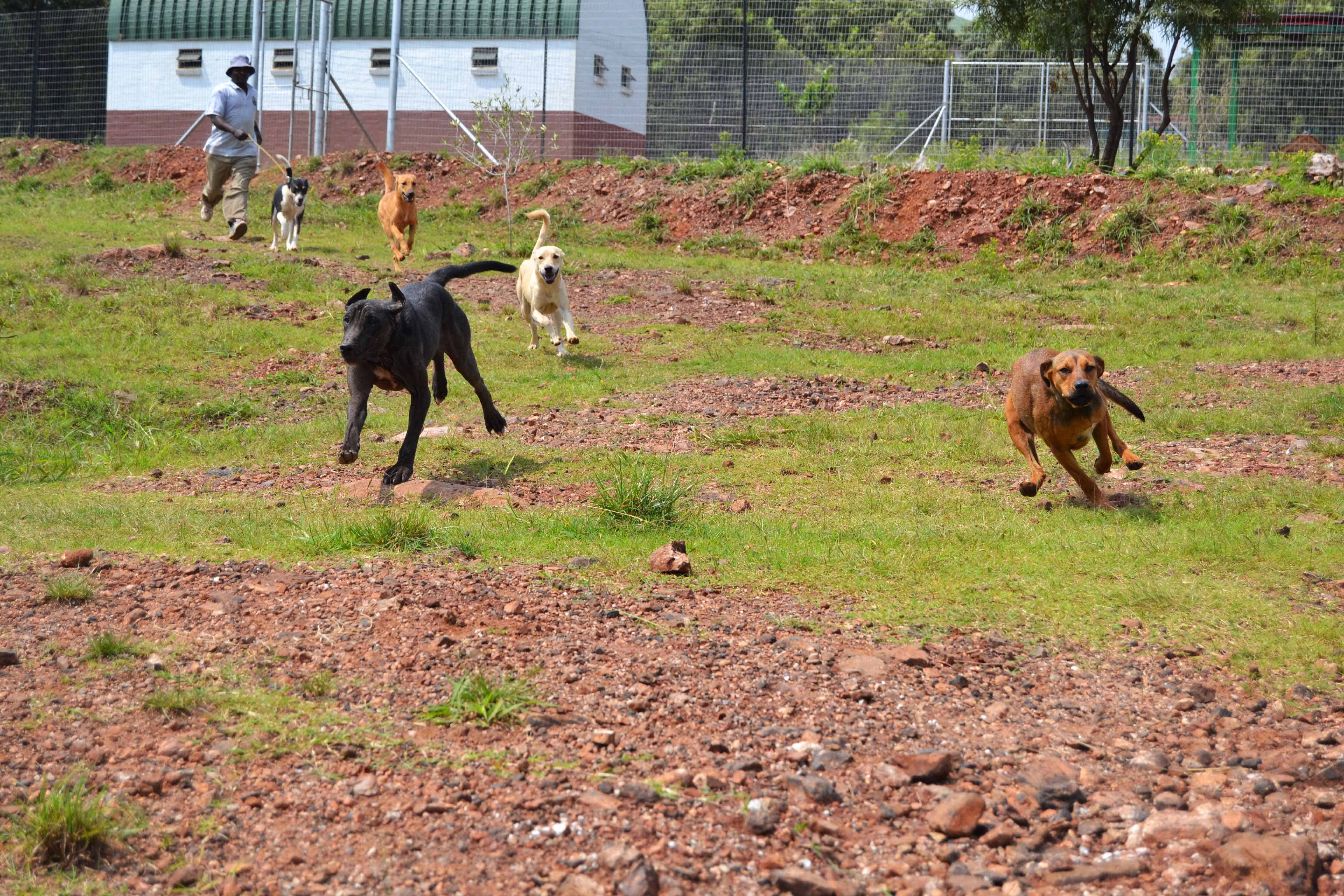 Pretoria » Blog Archive » Woodrock Animal Rescue Heroes