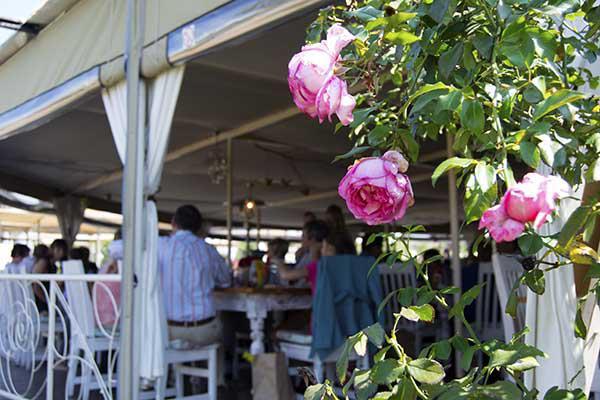 Ludwig's rose garden