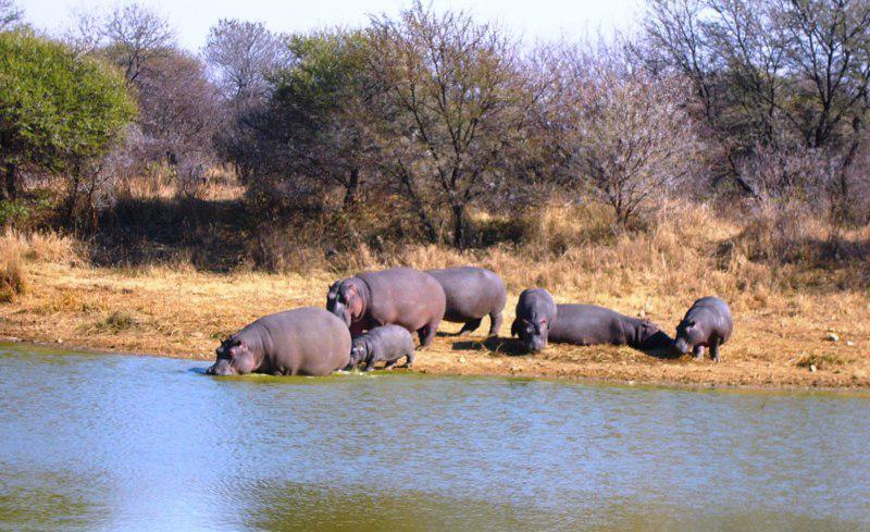 Dinokeng Hippo