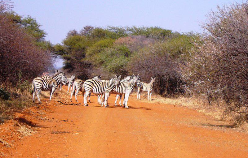 Dinokeng Zebra Crossing