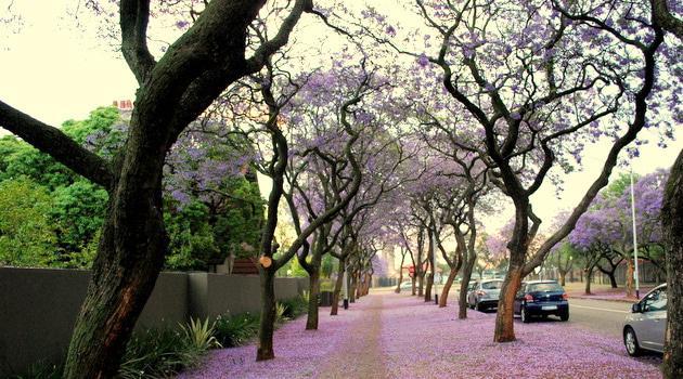 Arcadia, Pretoria