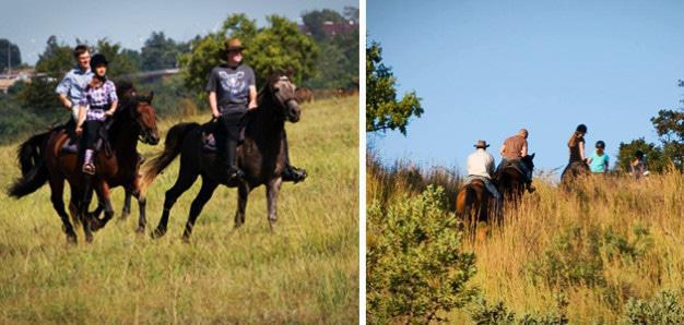 Cape Riding Pretoria