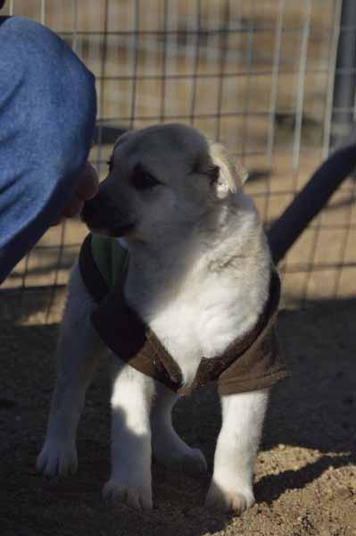 Adopt A Pet Pretoria