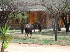 Leopardsong Game Lodge 244