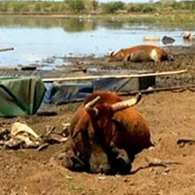 Farmers struggle to pay debts due to drought