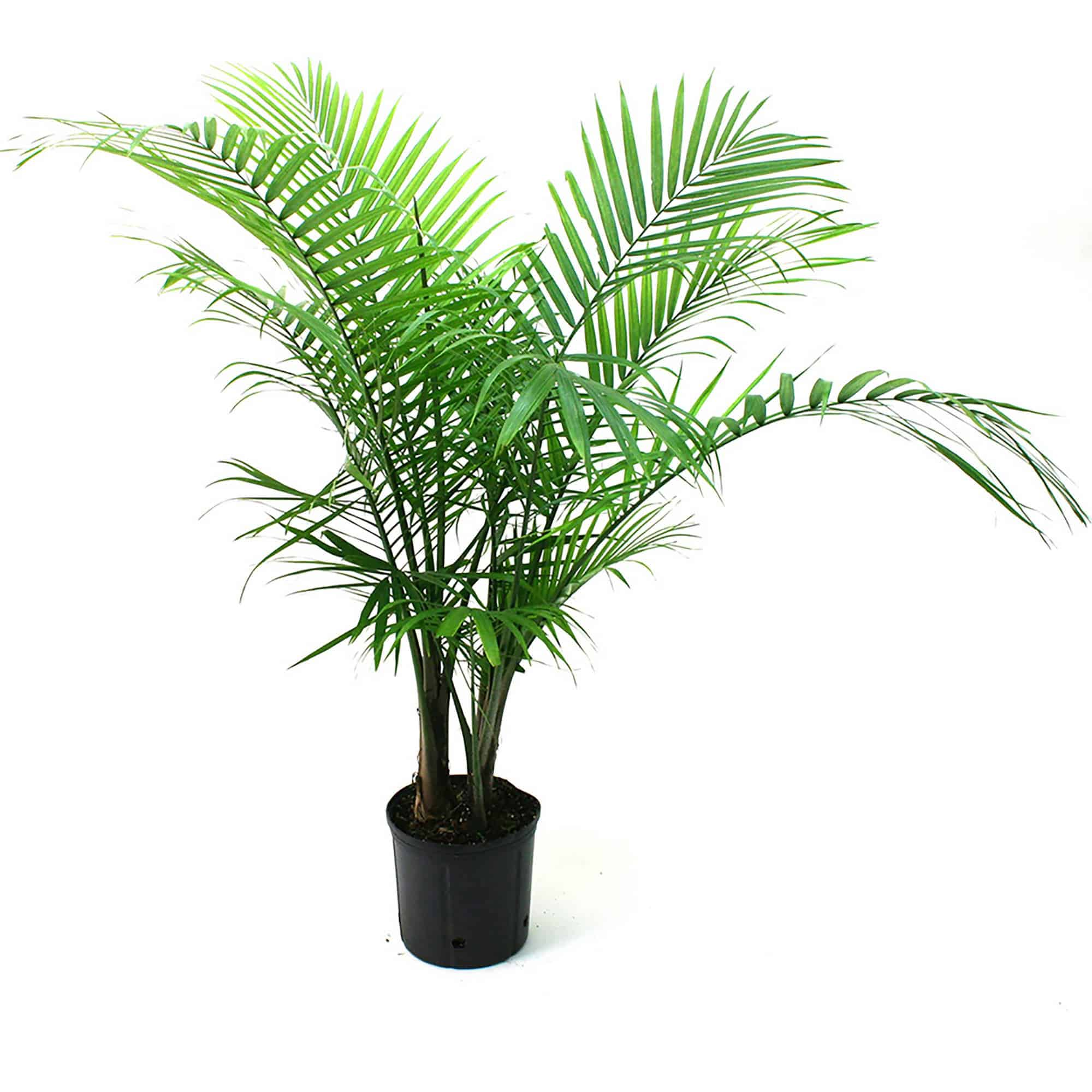 Indoor Plants That Purifies The Air Naturally Pretoria