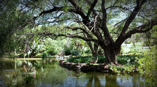 jan-cilliers-park-picnic-spots-groenkloof