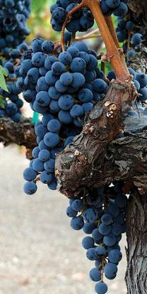 poi-wine-list-image-45-208