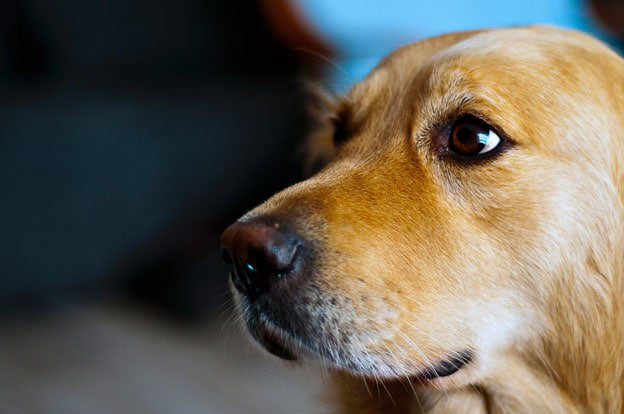 From mere nuisances to life threatening conditions, steps can be taken to protect your dog from both infectious diseases and pest-related conditions.