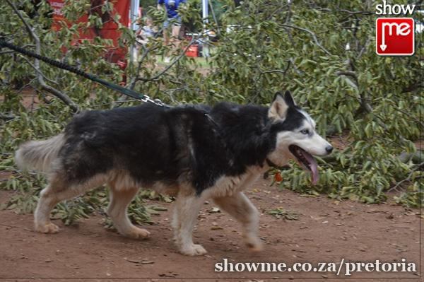 Pretoria Dog Rescue