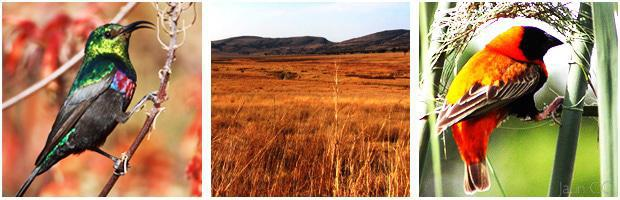 Vlei Ramble Hiking Trail in the Kgaswane Mountain Reserve