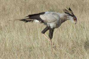 Birding in Rustenburg